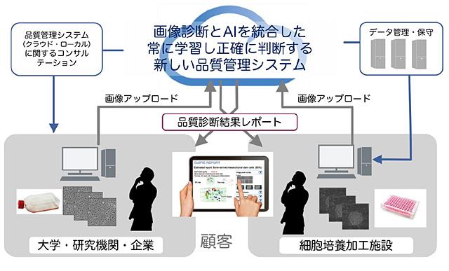 「AIによる高純度間葉系幹細胞の品質検査高度化の調査研究」を表した図