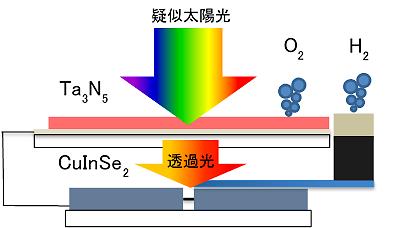 窒化タンタル光触媒をベースとする酸素生成光電極と、CuInSe2をベースとする水素生成光電極とからなるタンデムセルの模式図