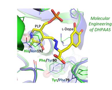 酵素中のアミノ酸改変のイメージ図