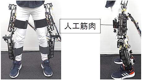 今回開発した長寿命型の軸方向繊維強化型人工筋肉を適用した可変粘弾性下肢アシスト装具Airsistの写真