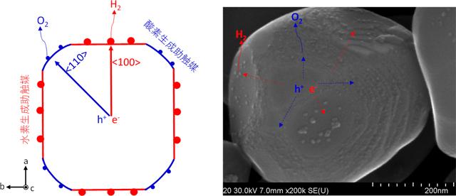 空間的電荷分離機能による高効率水分解光触媒の反応モデルと構造