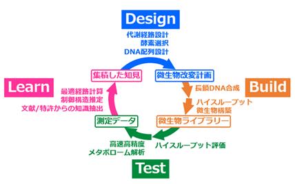 DBTLワークフローの図